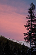 Snow On Trees Prints - Pink Sunset Print by Lisa  Spencer