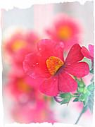 Pink Print by Susie DeZarn