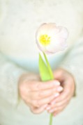 One Woman Only Prints - Pink Tulip In Womans Hands Print by Photo by Ira Heuvelman-Dobrolyubova