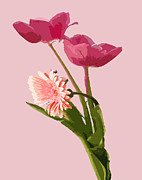 Interior Digital Art Digital Art - Pink Tulips by Karen Nicholson