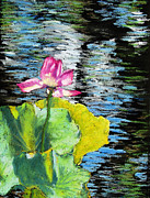 Print Pastels Originals - Pink Water Lily by Abbie Groves