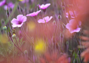 Wild Flower Art - Pink wild Geranium by Heiko Koehrer-Wagner