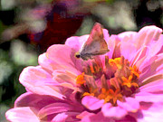 Blooms  Butterflies Painting Posters - Pink Zinnia with Tiny Butterfly Poster by Elaine Plesser