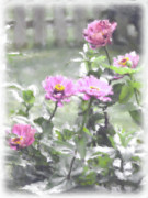 Zinnias Digital Art - Pink Zinnias by Susan  Lipschutz