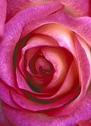Pinklady Print by Kathy Yates