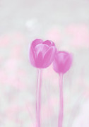 Friendly Digital Art - pinkTulips by Rosi Lorz