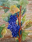 Winery Paintings - Pinot Don by Suzanne Krueger