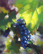 Napa Valley Vineyard Paintings - Pinot Grape Summer Light by Takayuki Harada