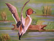 Waterfowl Paintings - Pintail Duck II by Belinda Lawson