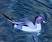 Ducks Pastels - Pintail by Jan Amiss