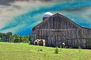 Country Scenes Photo Metal Prints - Pinto Summer Metal Print by Jan Amiss Photography