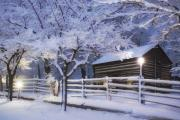 Snowy Night Night Photo Prints - Pioneer Cabin at Christmas Time Print by Utah Images