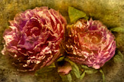 Close Up Floral Mixed Media Framed Prints - Piony Framed Print by Svetlana Sewell
