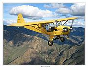 Airplane Artwork Posters - Piper Cub Poster by Larry McManus