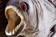 Mounted Fish Prints - Piranha fish close up Print by Simon Bratt Photography