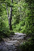 Stone Path Photos - Pisgah Path by Rob Travis