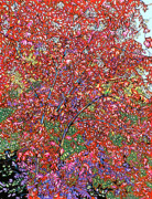 Nadi Spencer Metal Prints - Pistache Tree Metal Print by Nadi Spencer