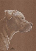 Colored Pencil Metal Prints - Pit Bull Metal Print by Stacey Jasmin