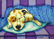 Jay Schmetz Framed Prints - Pit Bull Terrier Sleeping Framed Print by Jay  Schmetz