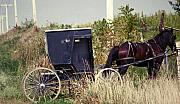 Amish Buggy Prints - Pit Stop Print by Jame Hayes
