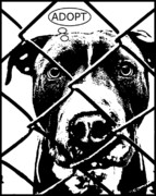 Pittie Mixed Media Prints - Pitbull Thinks Adopt Print by Dean Russo