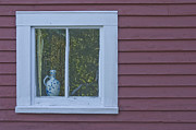 Ceramic Jug Framed Prints - Pitcher in window Framed Print by Jim Wright
