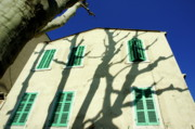 Bare Trees Posters - Plane tree casting shadows on a quaint building Poster by Sami Sarkis