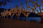 Christmas Lights Art - Plane Trees At Christma by Joana Kruse
