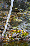 Reflection In Water Prints - Plant Life on Rocky Canadian Lake Shore Print by Gordon Wood