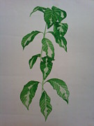 Nature Study Painting Prints - Plant Print by Shilpa V N