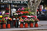 Outdoor Flower Shop Posters - Plantas Lola Seville Poster by Mary Machare