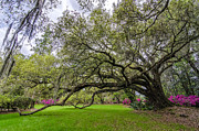 Huge Photo Prints - Plantation Oak  Print by Drew Castelhano
