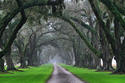 Live Oaks Originals - Plantation Road by Matthew Winn