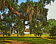 Evergreen Plantation Prints - Plantation Print by Steve Harrington