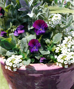 Perennials Painting Posters - Planter of Purple Pansies and White Alyssum Poster by Elaine Plesser