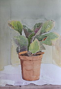Potted Plant Paintings - Planter by Radhika Bawa