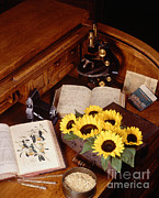 Desk Photo Prints - Plants And Seeds Print by Science Source