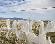 Plastic Garbage Bag On A Wire Fence Print by Paul Edmondson