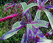 Plasticized Digital Art Framed Prints - Plasticized Cape Lily Digital Art Framed Print by Merton Allen