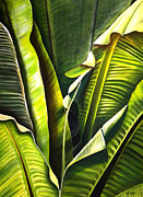 Banana Art Prints - Platano Tropical Print by Maribel Garzon