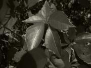 Jeff Breiman - Platinum Leaves 2