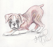 Boxer Drawings Posters - Play with me Poster by Angela Pike