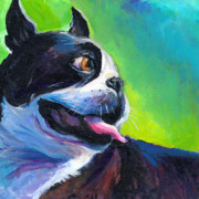 Commissioned Pet Portrait Art - Playful Boston Terrier by Svetlana Novikova