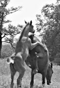 Equine Art Photographs Posters Digital Art - Playing Colt by El Luwanaya Arabians