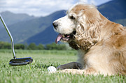 Playing Golf Prints - Playing golf with a dog Print by Mats Silvan