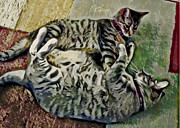Kitty Digital Art - Playtime by David G Paul