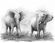 Elephants Drawings - Playtime by Phyllis Howard