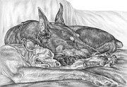 Pinscher Drawings Posters - Pleasant Dreams - Doberman Pinscher Dog Art Print Poster by Kelli Swan
