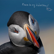 Atlantic Puffin Framed Prints - Please be my Valentine... Framed Print by Nina Stavlund