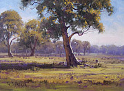 Eucalyptus Paintings - Plein air painting by Graham Gercken
